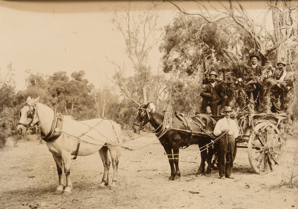Best decorated horse and dray, Bibra Lake 1904, Mister's Bray and Pearse.
