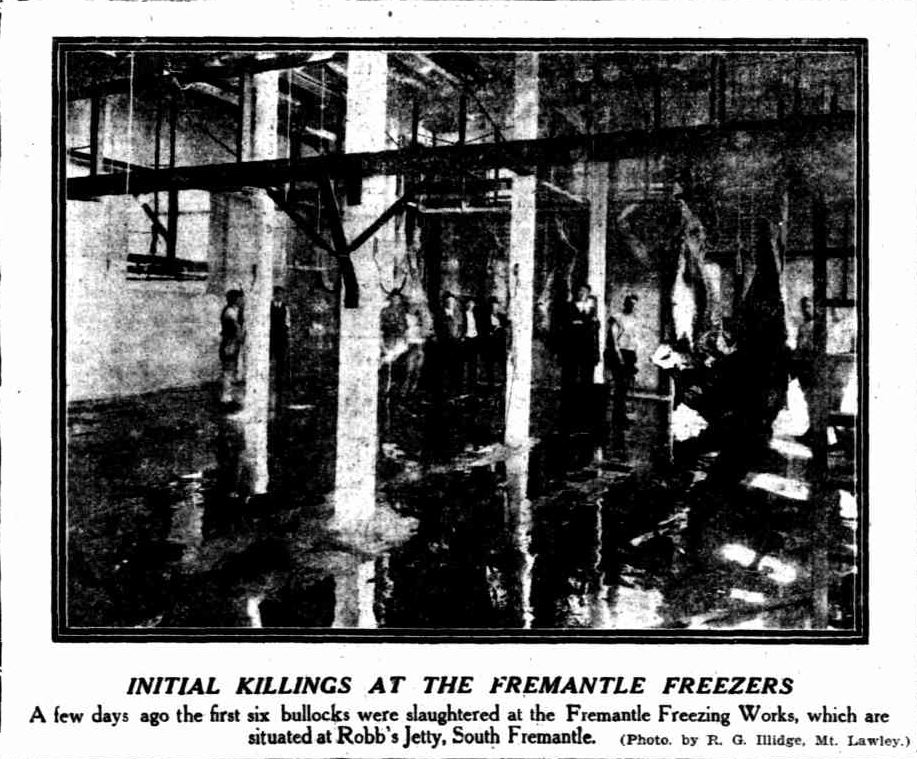 Article in West Australian covering the first animals to be slaughtered at the new abattoir, 1922.